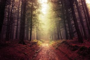 If These Trees Could Talk LXVI. by realityDream