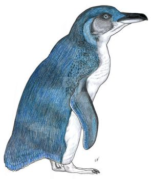 Little blue penguin by PaleoAeolos