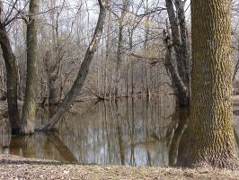 Bare Trees in Pond Water 2 by FantasyStock