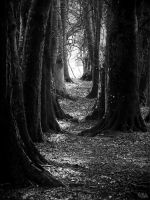 Tunnel of Trees by EmMelody
