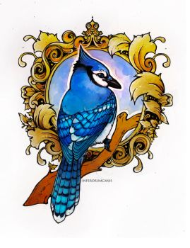 Blue Jay by Canis-Infernalis