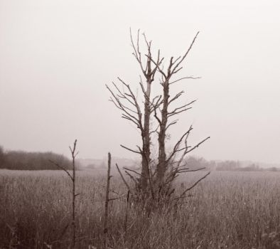 Stodmarsh Tree by danhortonszar