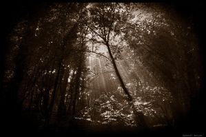Forest by Gazo