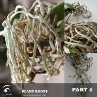 Roots Part 2 by creatief2