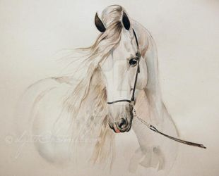 Andalusian horse portrait by Olga5