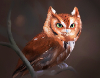 Owl by bananarinya