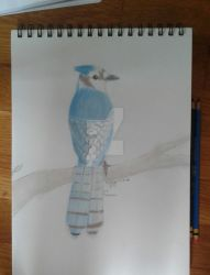 Blue Jay (using only a blue and a brown pencil) by Ninja--7