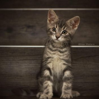 Filou, the cutest pain in the ass.. by hoschie