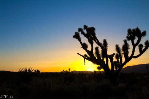 Sunset at Joshua Tree Forest by Heather-Ferris