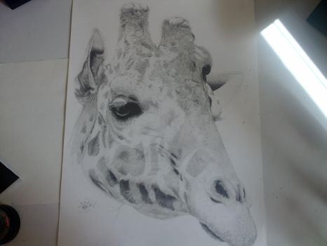 big giraffe by abearoriginal