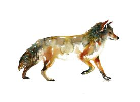 Canine by SALTWatercolors