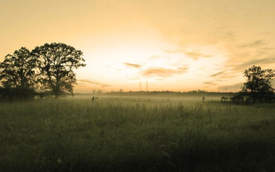 Foggy Field Sepia by netherl