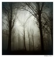 Brume by titus-fr