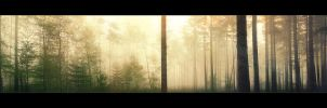 A Forest by Burning-Liquid