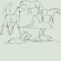 Foal Doodles [WIP] by newvoh