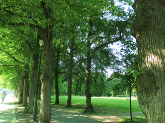 Oslo - Lines of Trees by ErinPtah