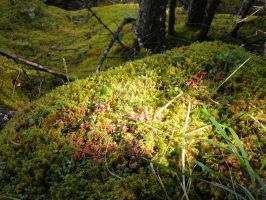 Sunlight on Moss by Ayjah