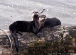 Otters by NoctemPhotography