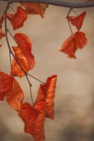 Autumn leaves 2 by wfpronge