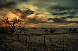 Sunset At The Old Tree by kkart
