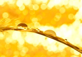The gold rush by pqphotography