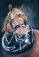 Unequally Equine by fourquods