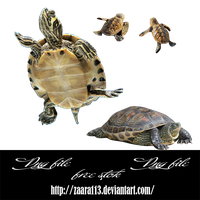 Turtle png by nasrzaara