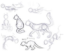 Cat Poses by Phails