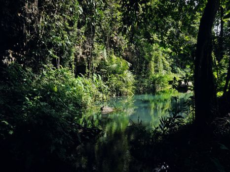 Green Swamp by WillTC
