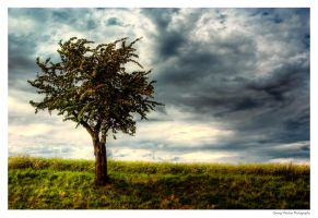 the stormy cherry tree by guality