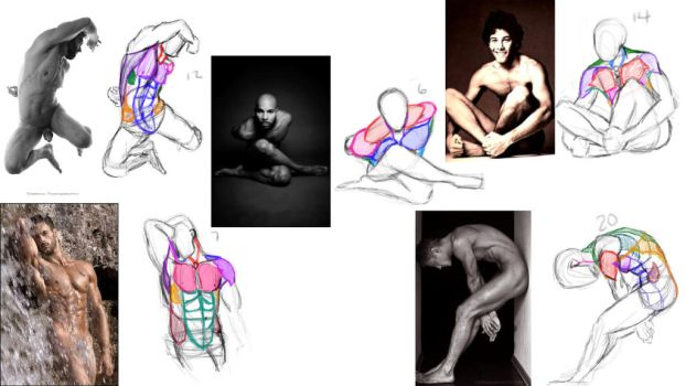 Upper Body Muscle Construction II  1/2 by anaisgomez