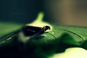 Tear of Nature by Hussain-Studio