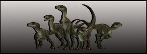 Novaraptor - 5 Poses by ReD8ull