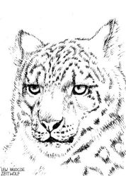 ACEO: Snow Leopard by enonea