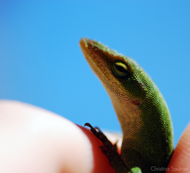 Anole Means Summer by Hydrodynamik