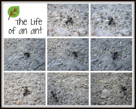 The Life Of An Ant by Rainbow826