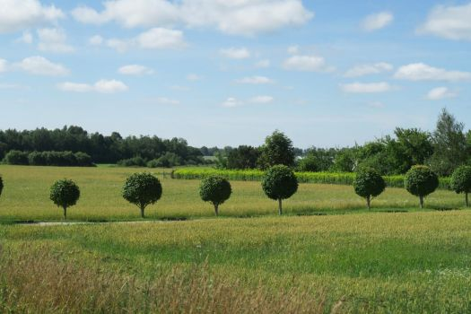 Landscape in summer 103 by MASYON
