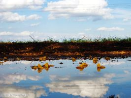 Reflection by wilminetto