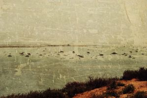 Camel on the cove by llimilea