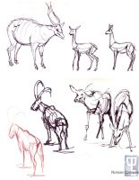 Animal Drawing Mid-Term Page 4 by mell0w-m1nded
