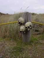 skulls on a post 02 by Treeclimber-Stock