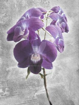 Orchid I by salmo666