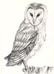 This Owl is What he Seems. by Sivia