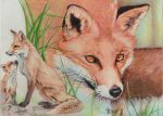 Red fox, ballpoint pen by Angeliqueperrin