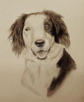 Dog Portrait Commission by rosiemayB
