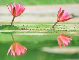 Lotus Through the Looking Glass by Freephunkateer