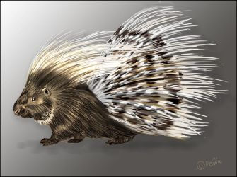 African crested porcupine by Reptangle
