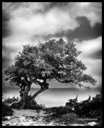 Tree with seaview by beesy-studio