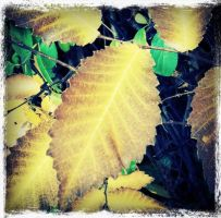 Brown Leaves with Yellow Detail by ycrad64