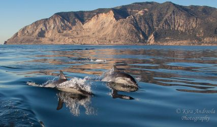 Common Dolphins by orcamistress101